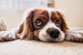 Ever Wonder What Your Dog Is Thinking?